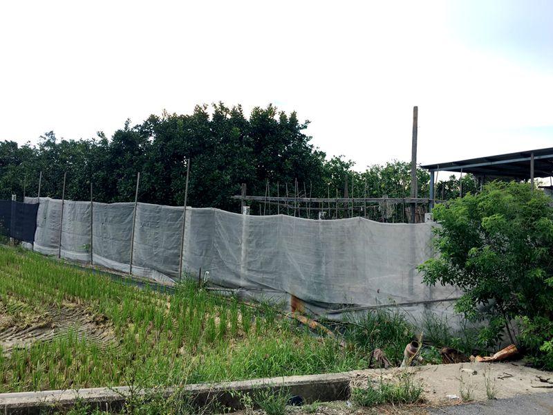 麻豆柚子園,台南市麻豆區謝厝寮段